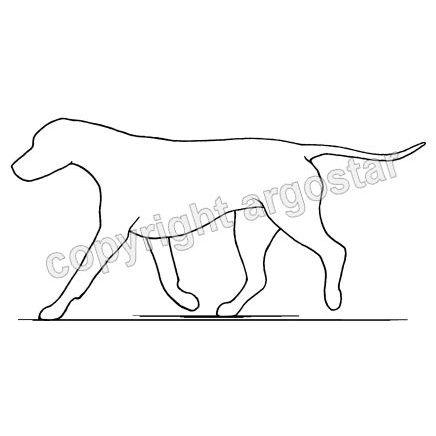 Limping dog - rear leg