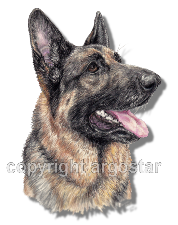 german-shepherd-portrait