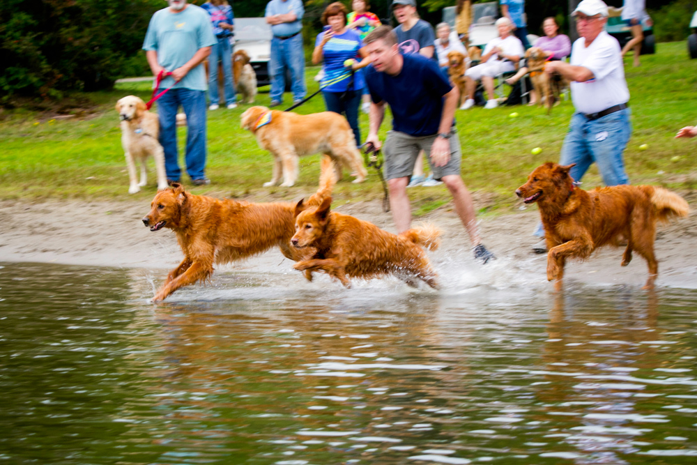 Odie participating in the Doggy Olympics at Goldstock 2014