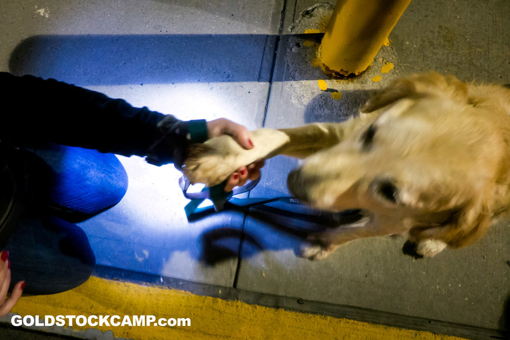 Golden Retriever from Turkey being greeted by NJGRRI and LIGRR volunteers at JFK International Airport last September.
