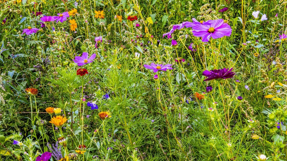 flower-meadow-2639062_1920.jpg
