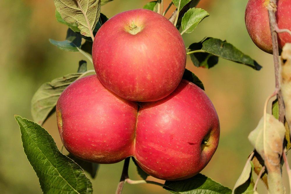 apple-1666113_1920.jpg