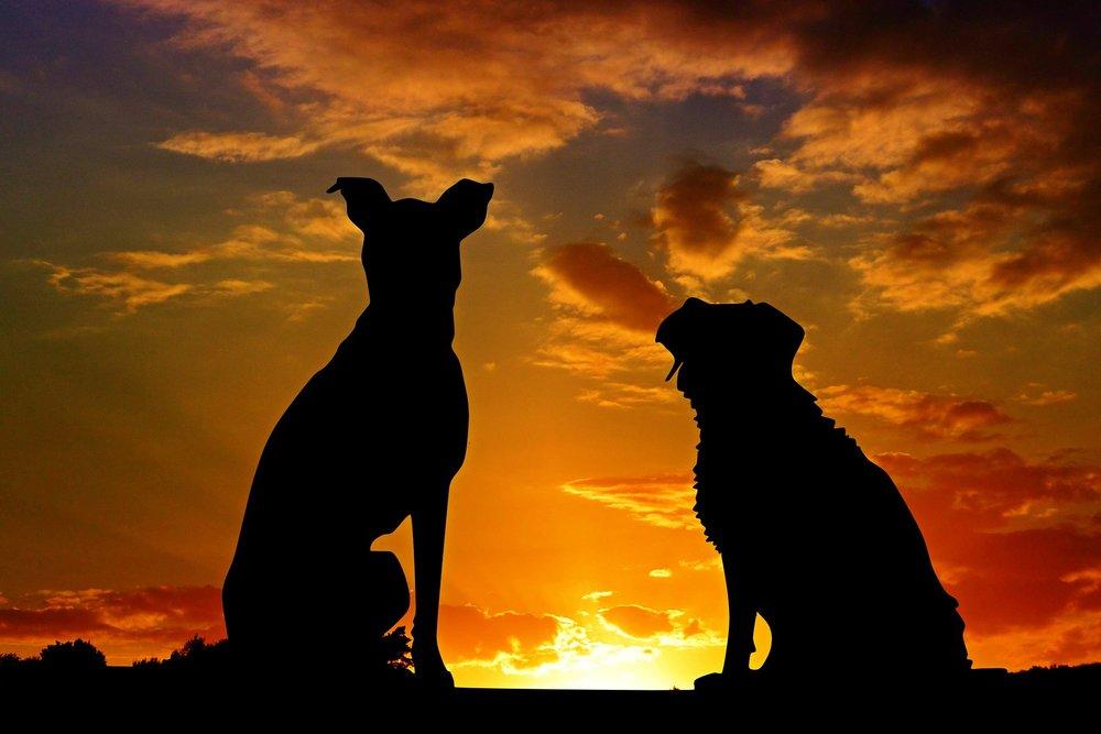 dogs-2222801_1920.jpg