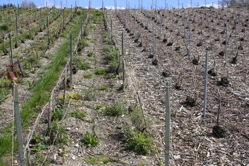 Aux Bulles Champagner Champagne nachhaltiger Weinanbau