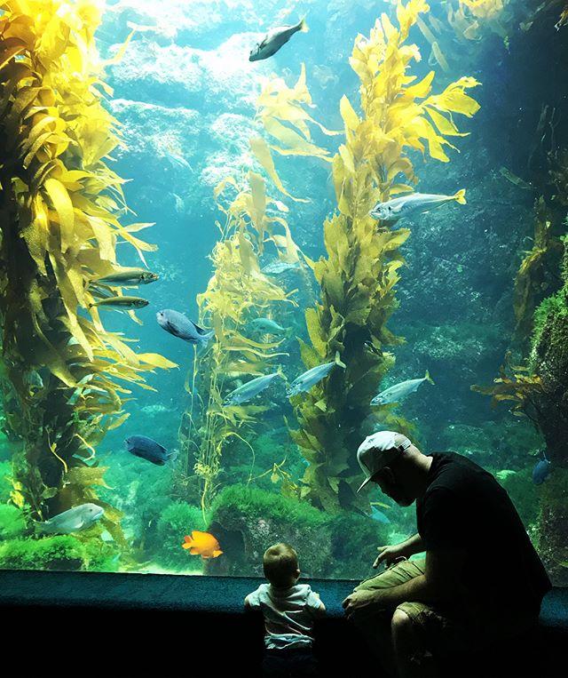 It's a week of firsts! #aquarium #sandiego
