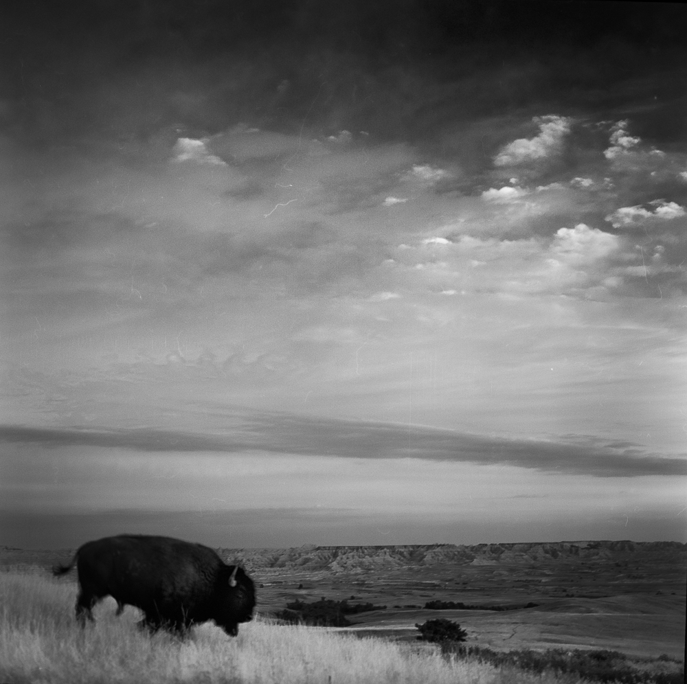 Buffalo_JCEpong_2014.jpg
