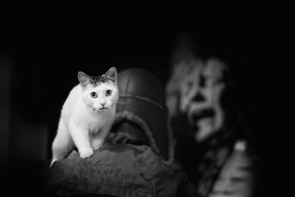 Catsurfing_JCEpong.jpg
