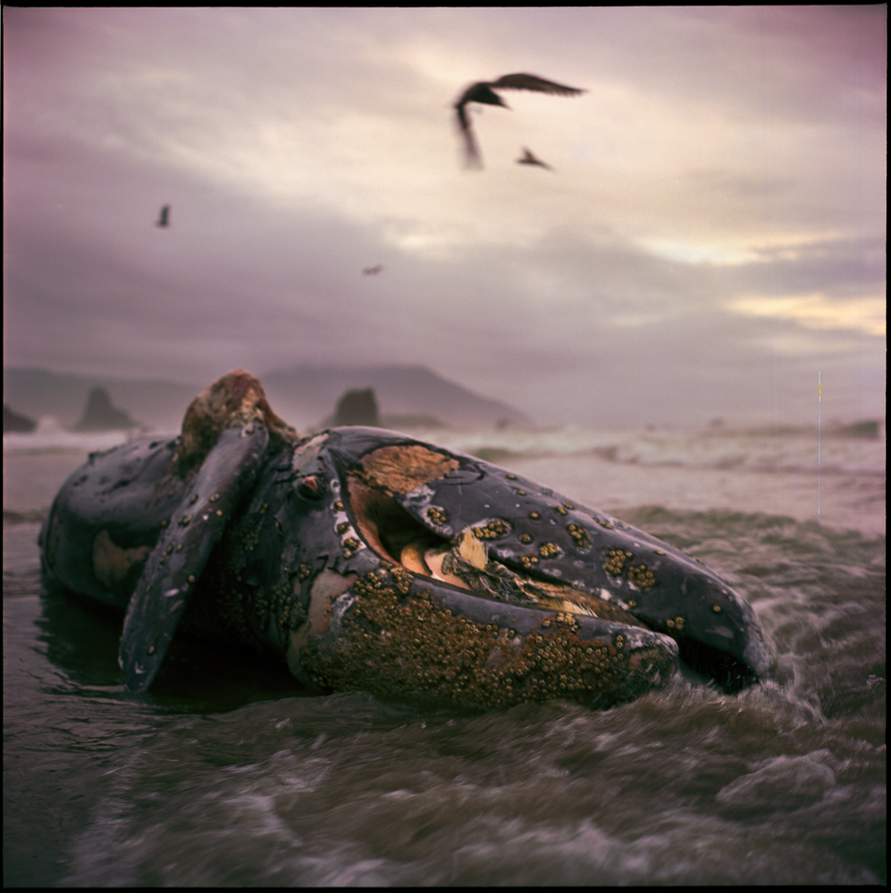 A Cetacean's Fate