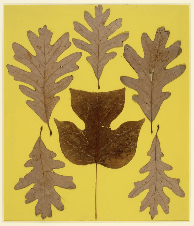 Josef Albers,  Leaf Study  IX    (via ICA Boston)