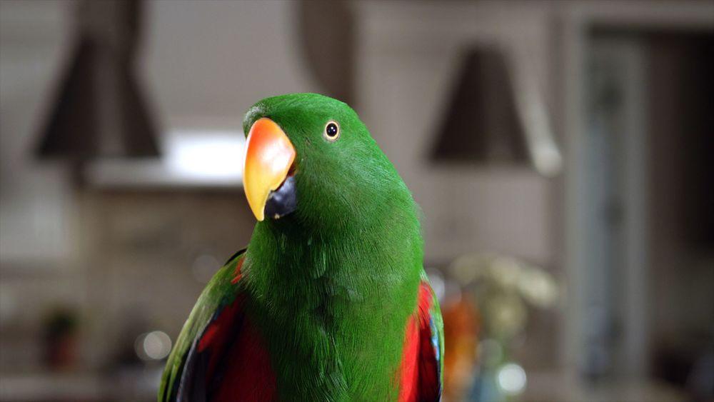 Parrot 2 Still.jpg