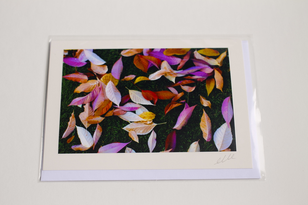 Spring has Sprung Line of Greeting Cards