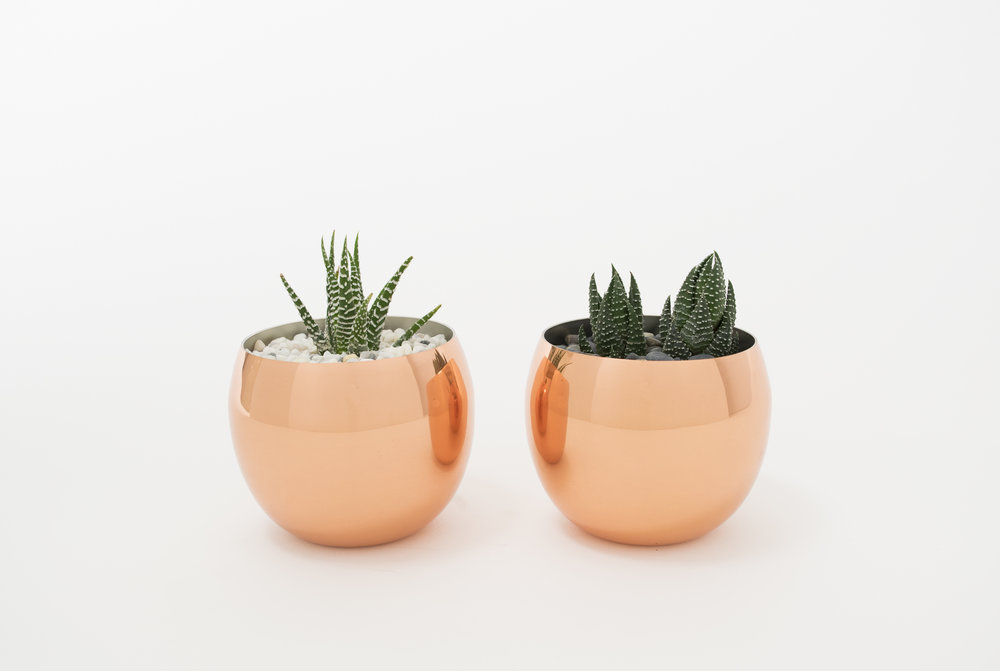 Copper Pots and Haworthia
