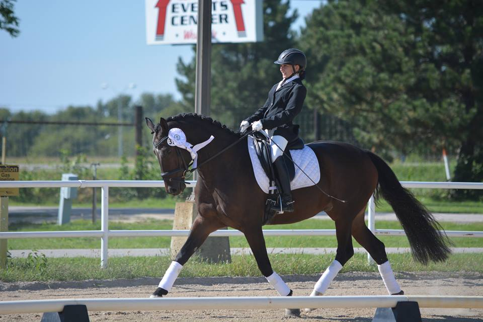 Macu is an ten year old Mushu son. He is successfully competing at second level with his junior rider Mackenzie Peer.