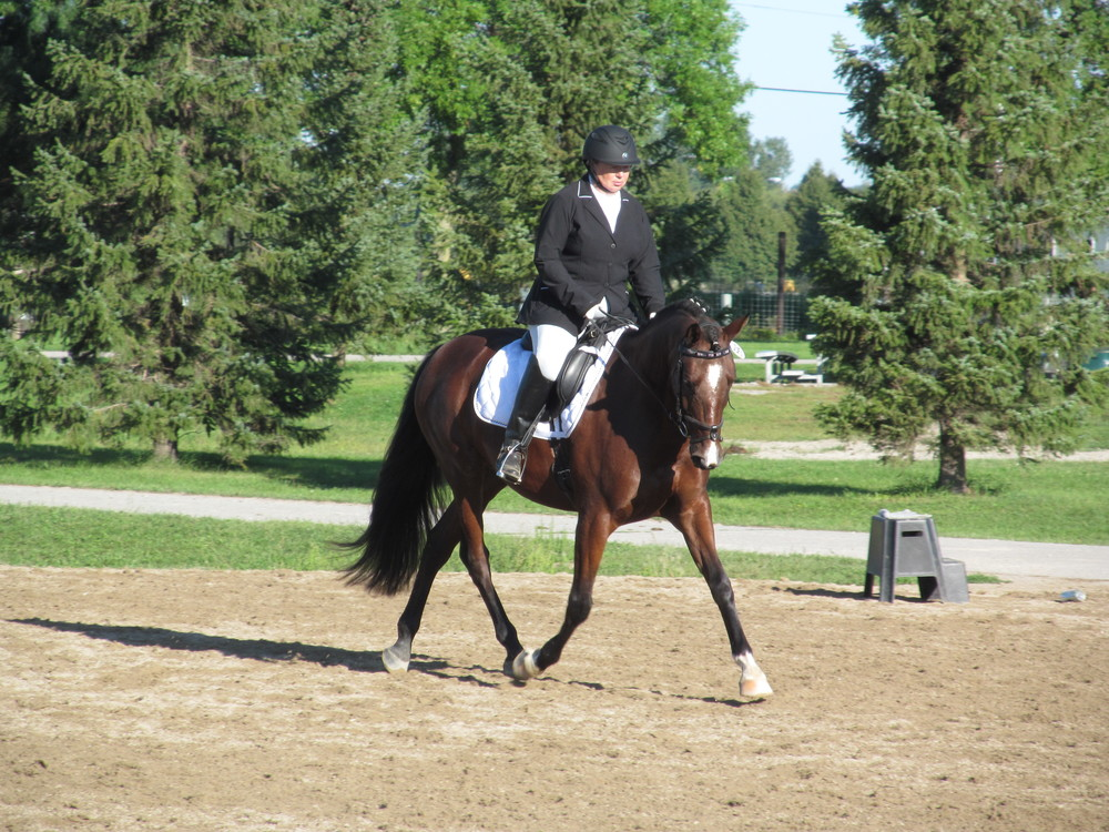 Mojito a nine year old Mushu son. He is successfully shown up through second level with his rider Annetta Hudson.