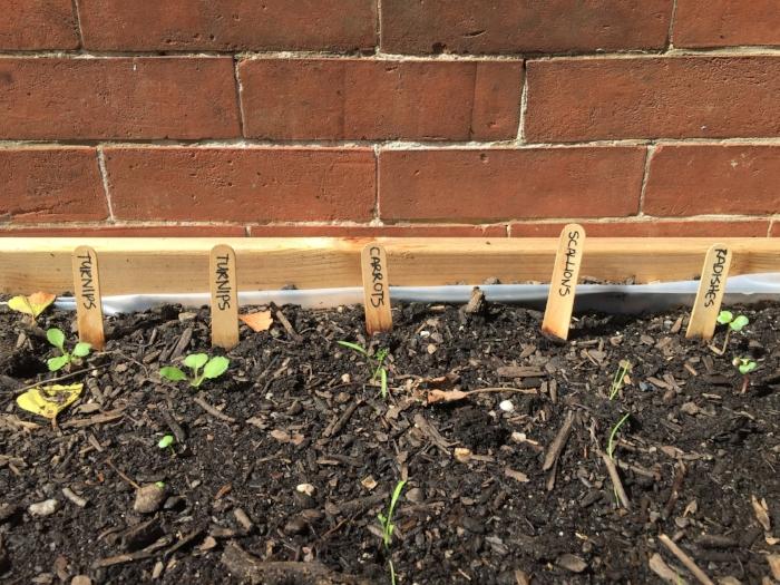 New vegetable seedlings