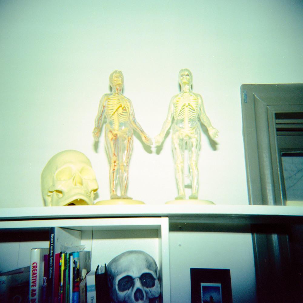 anatomy_models.jpg