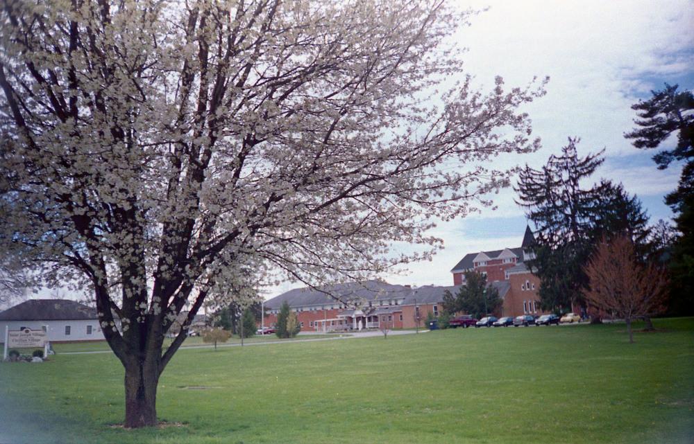 flowering_tree.jpg