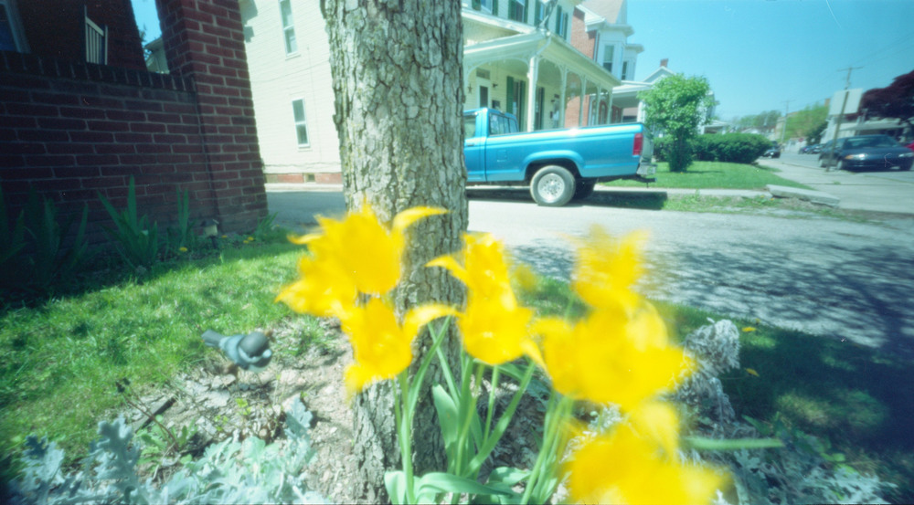 wppd_2016_tulips.jpg