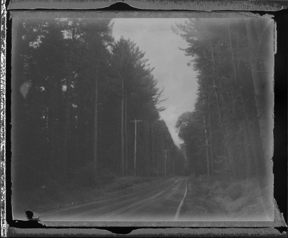 forest_neg.jpg