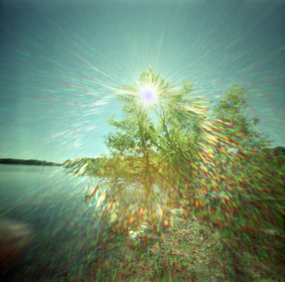 tree_glare.jpg