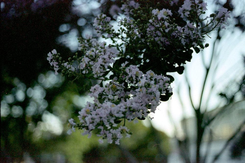 blooms_closeup_28486267303_o.jpg