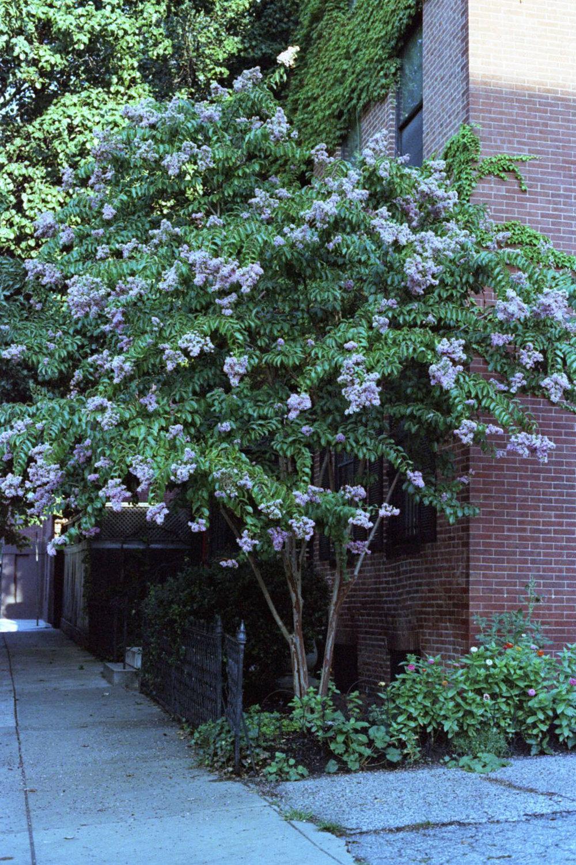 corner_tree_28486265163_o.jpg