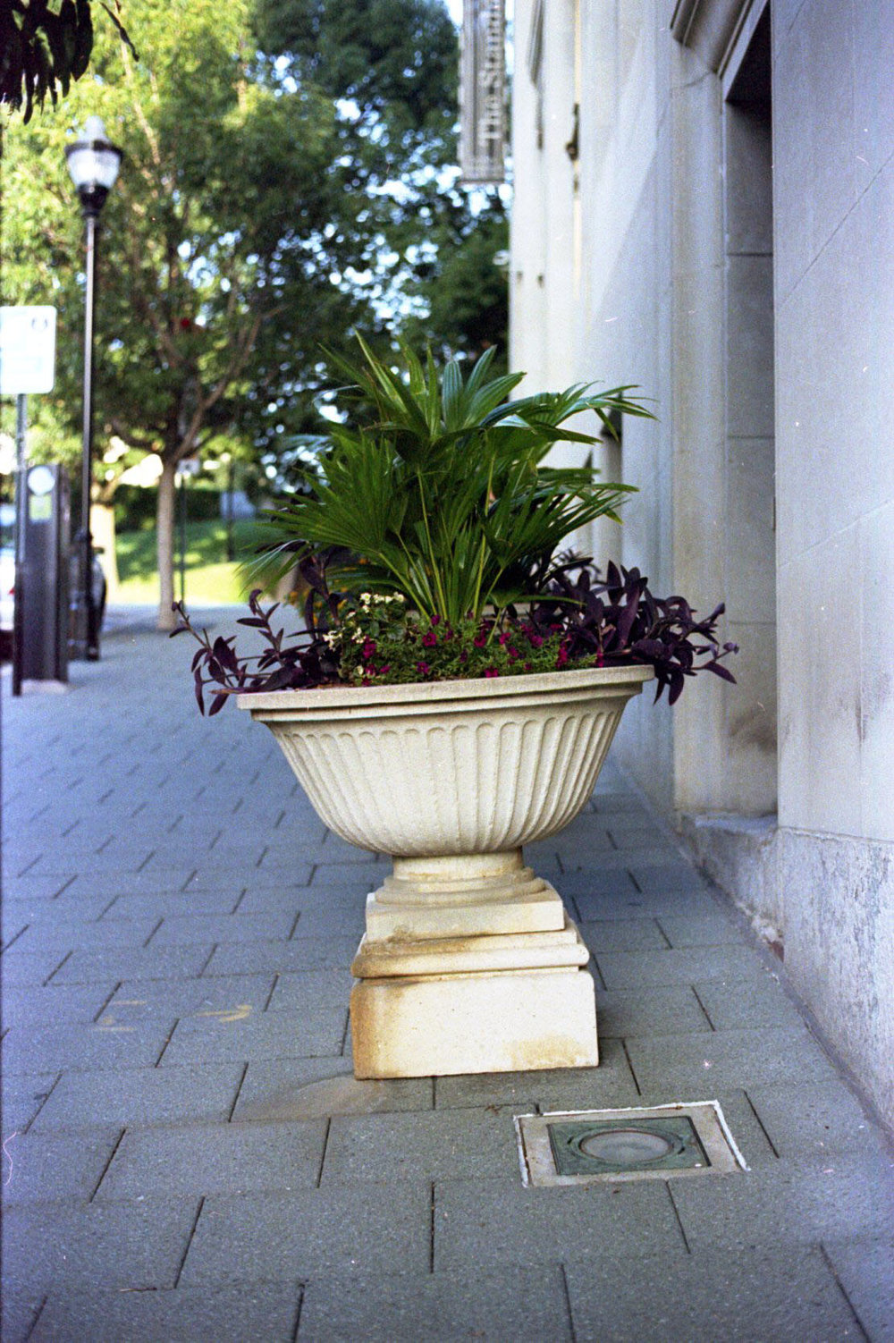 potted_plant_29072098776_o.jpg