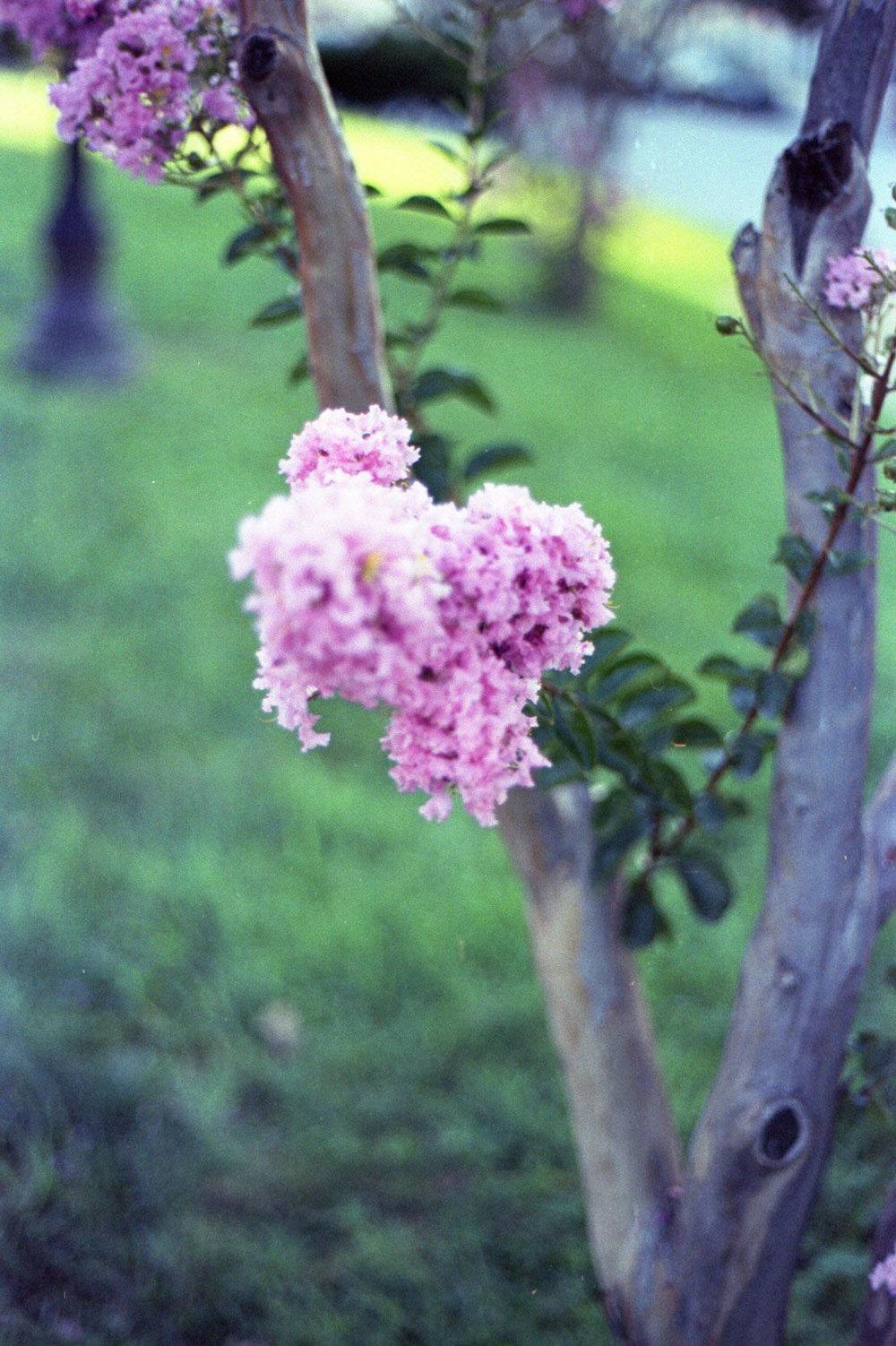 tree_blooms_28486260503_o.jpg