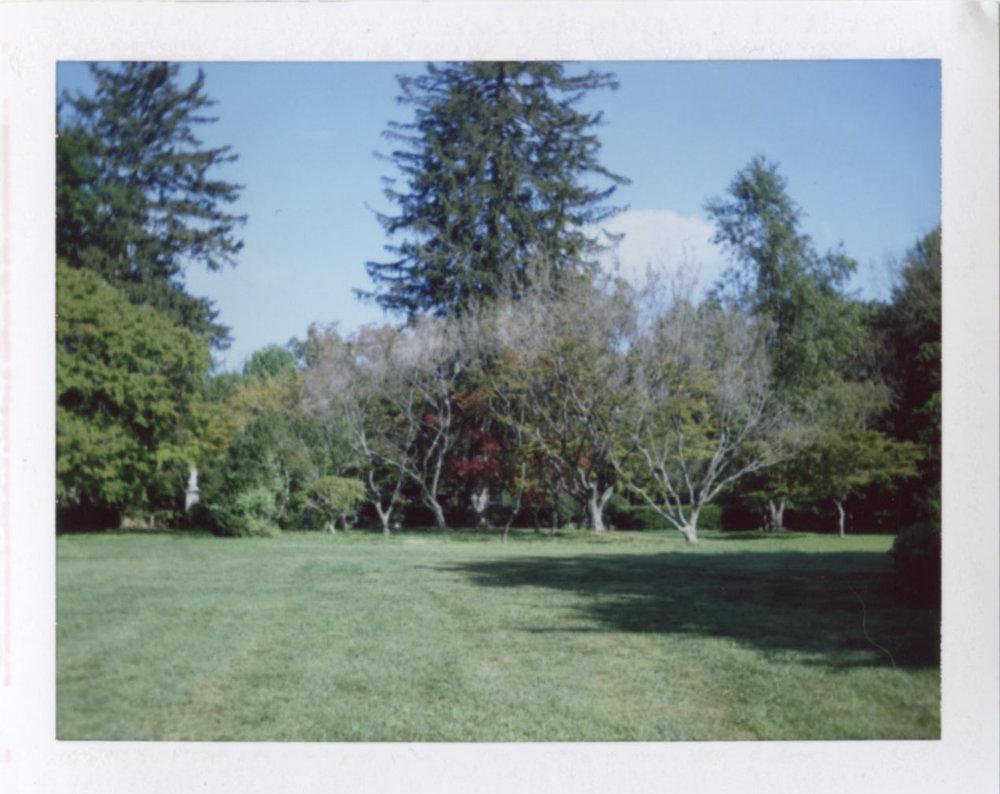cylburn_trees.jpg
