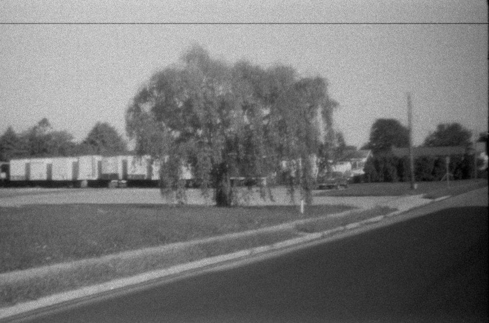 weeping_tree.jpg