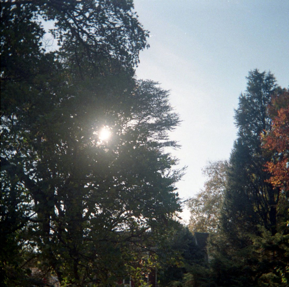 sun_thru_branches.jpg