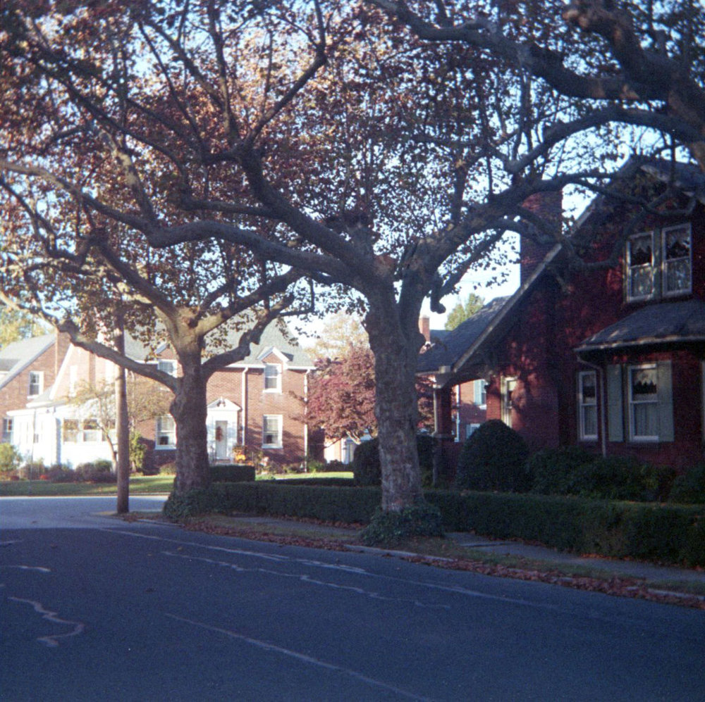 two_trees.jpg