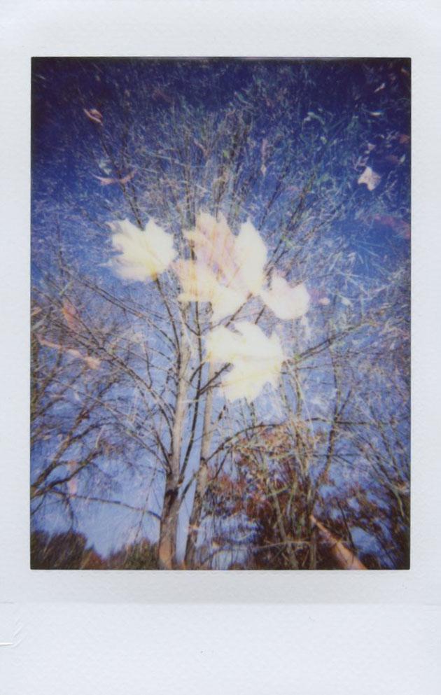 leaf_tree_double_x.jpg