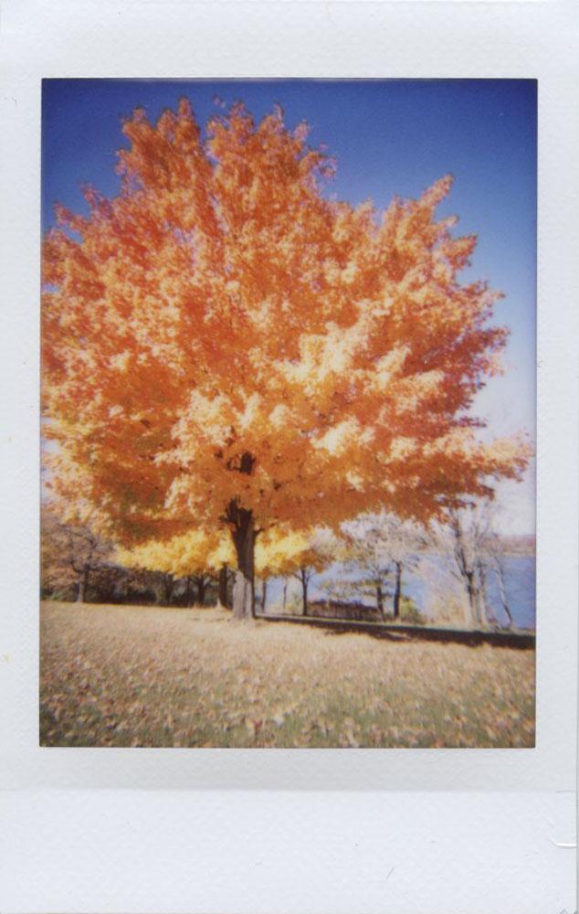 orange_tree_overexposed.jpg