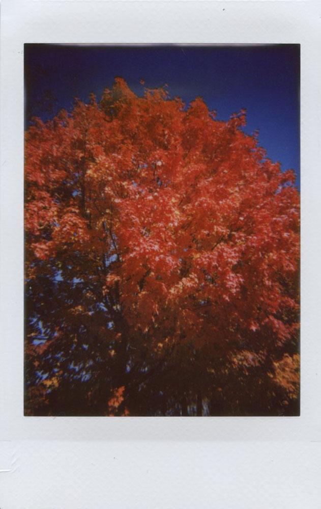 red_tree_top.jpg