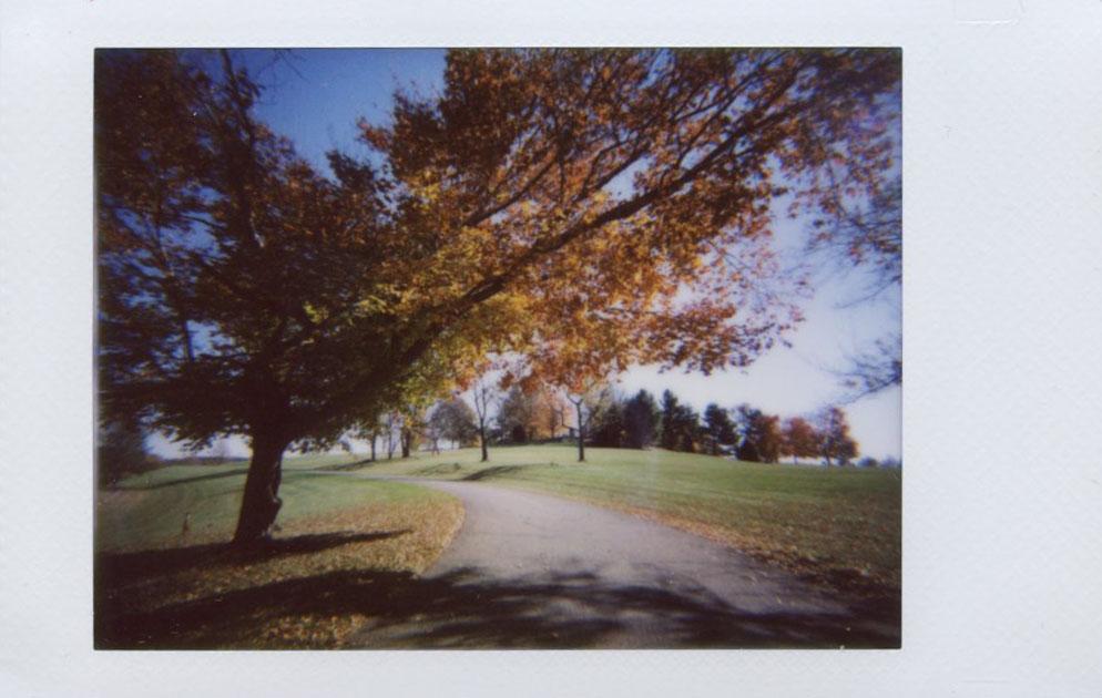 tree_at_codorus.jpg