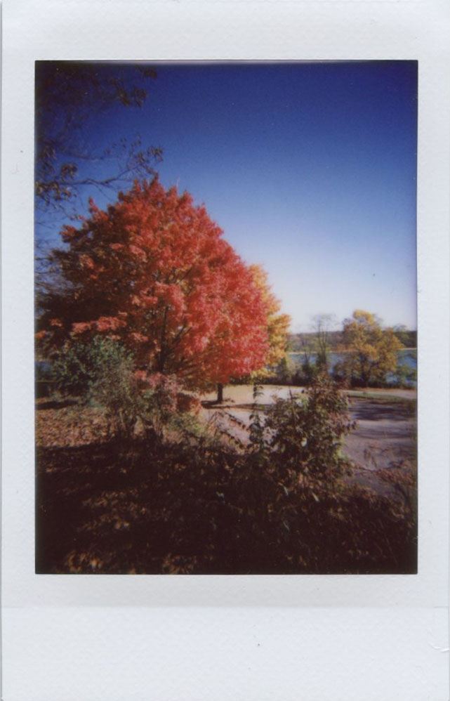 tree_by_lake.jpg