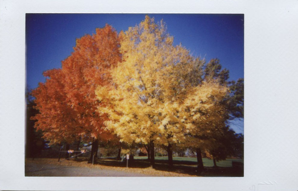 yellow_orange_trees.jpg