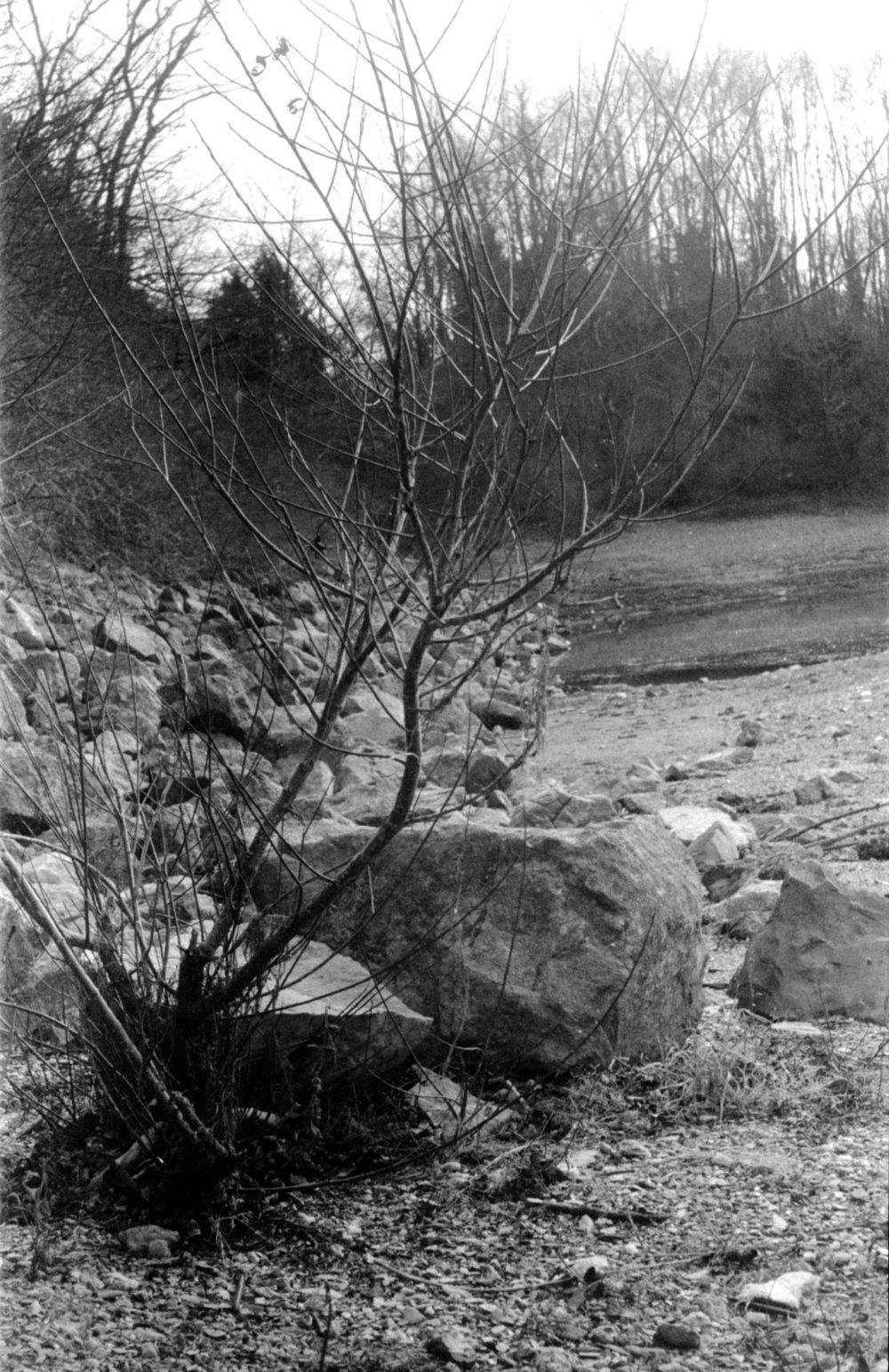 small_tree.jpg