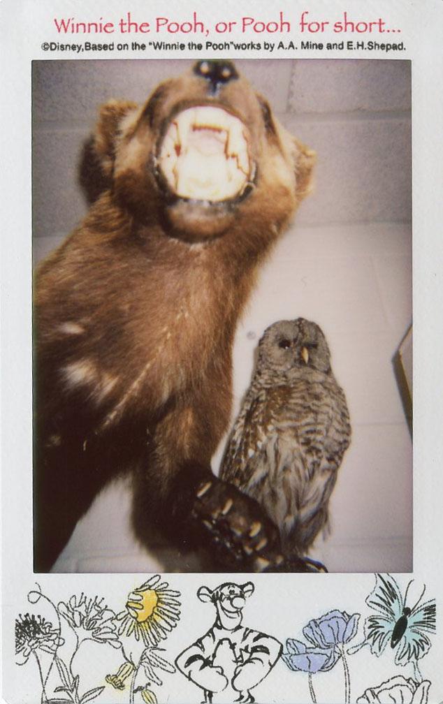 bear_cub_owl.jpg