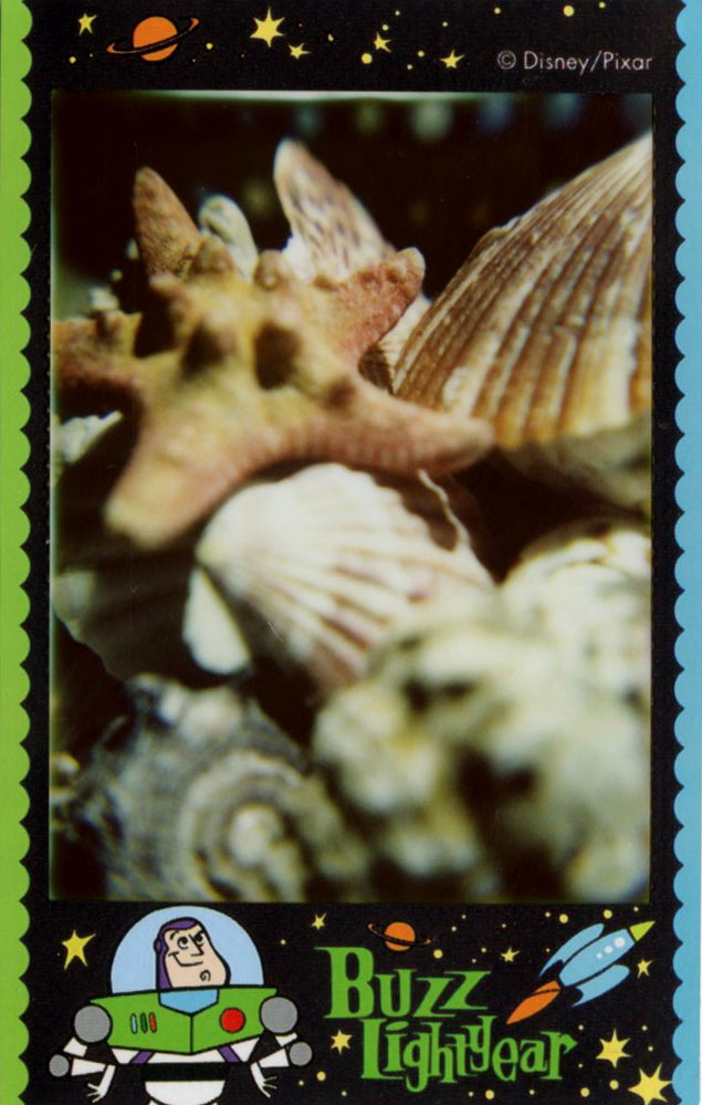 shells_buzz.jpg