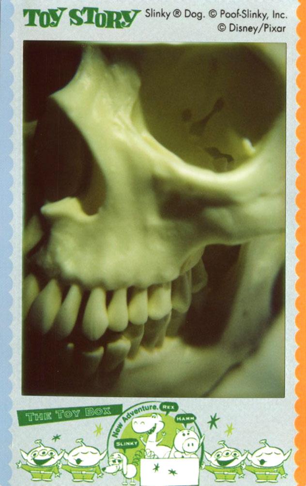 skull_left.jpg
