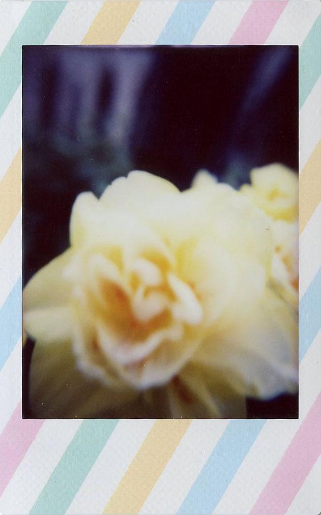 yellow_daffodil.jpg
