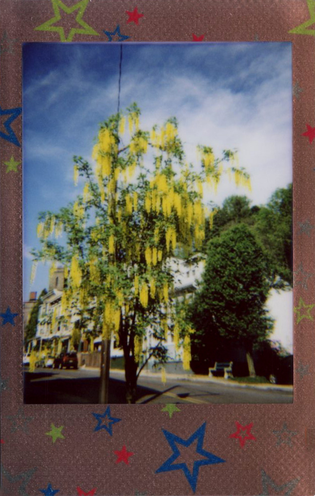 yellow_tree_blooms.jpg