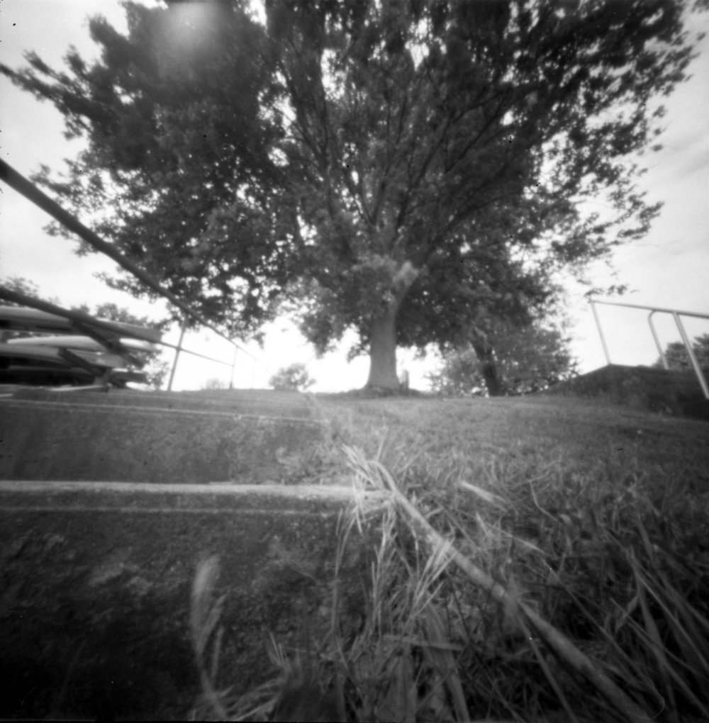 tree_steps.jpg
