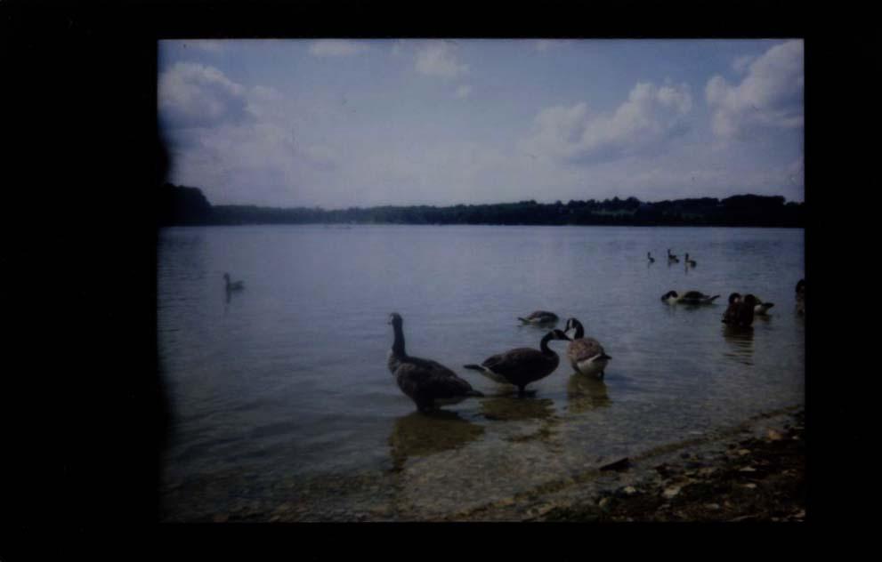 geese_at_lake_marburg.jpg