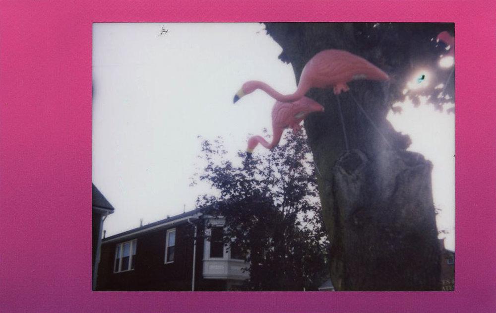 pink_flamingos_35503634253_o.jpg