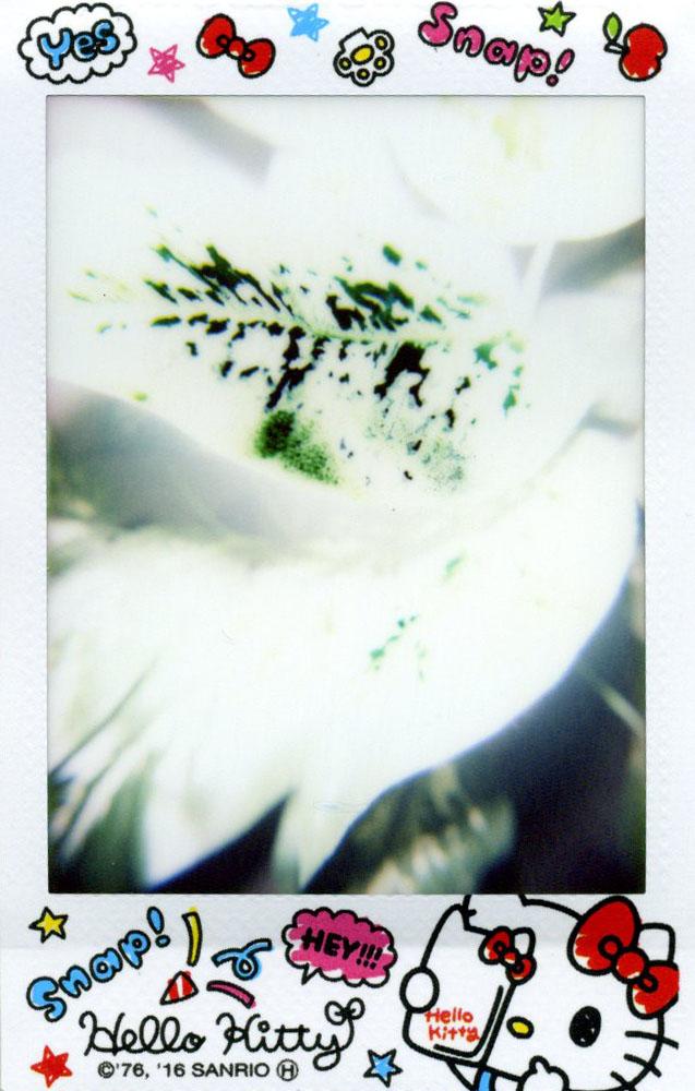 plant_leaves.jpg