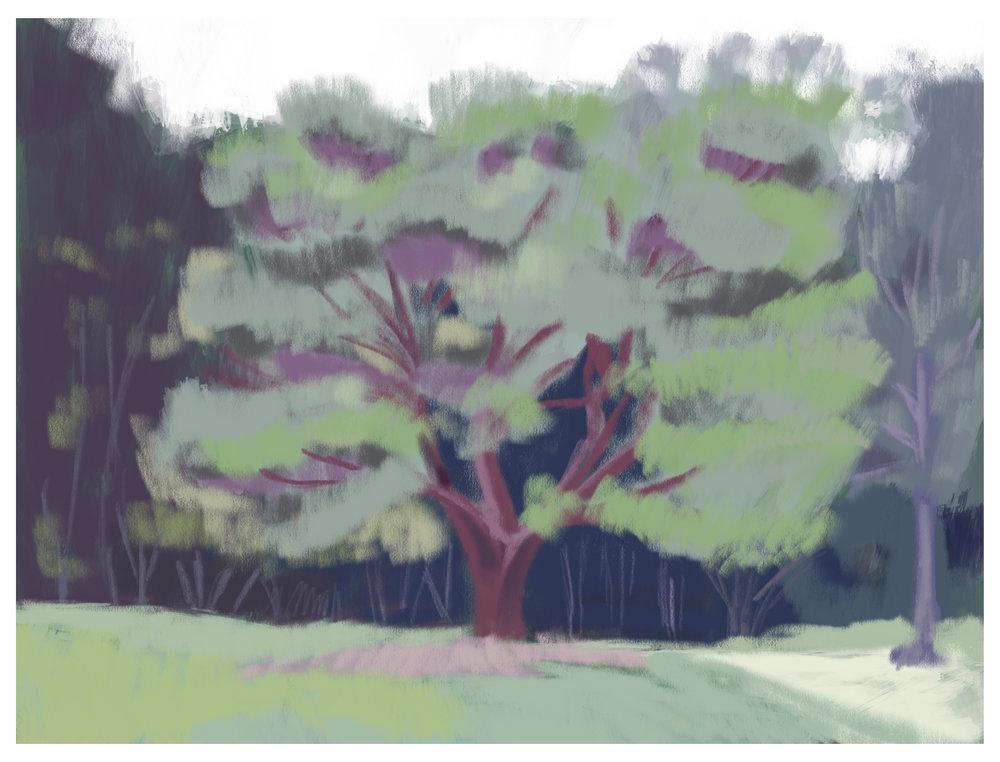 #2_-_Cylburn_Tree.jpg