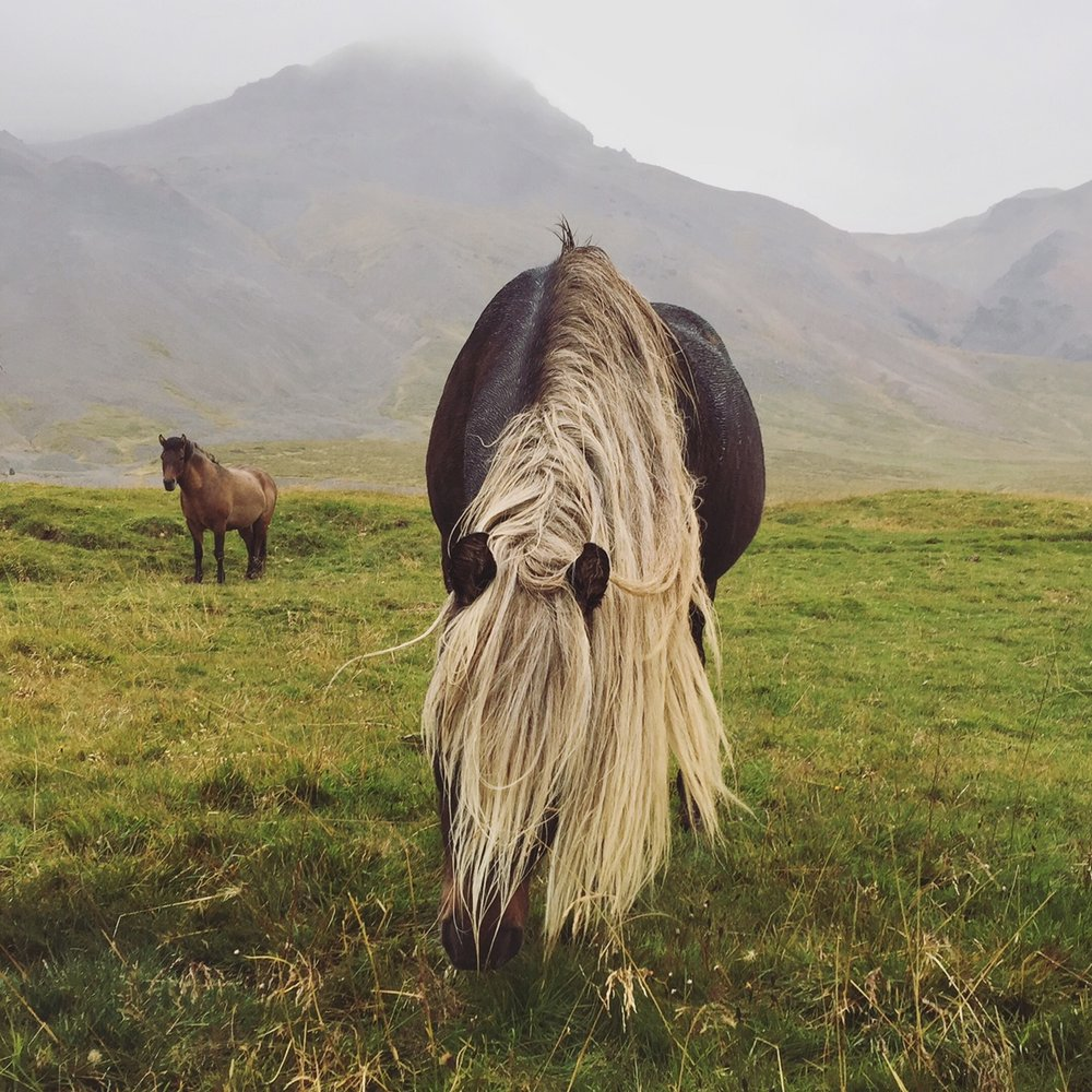Iceland_Katrina Jane Perry.jpg